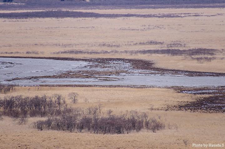 琵琶瀬湿原 望遠で一部を切り取ってみた。