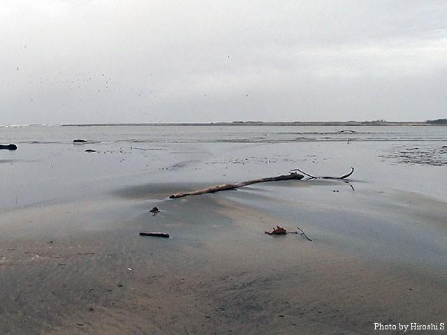 最下流域は遠浅となり、干潮時は砂州が広がる。