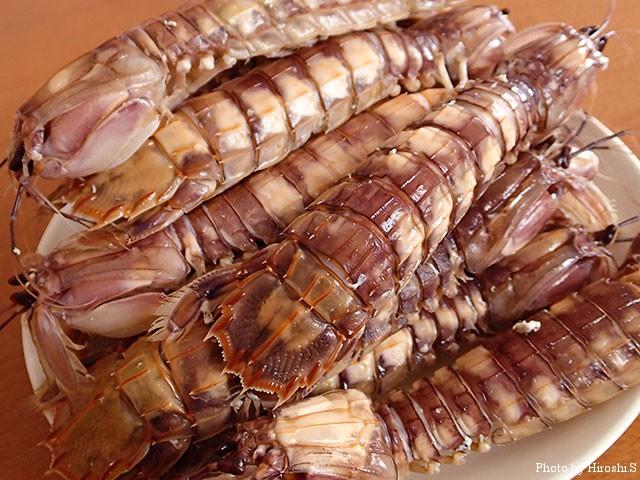 年に一度、蝦蛄を食べる。
