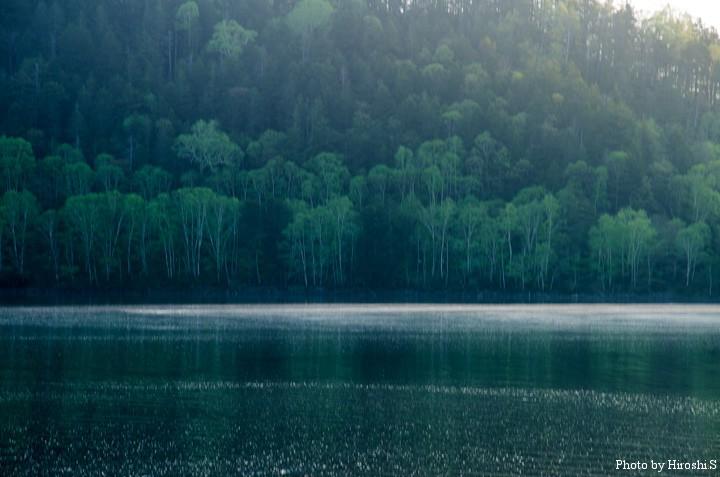 然別湖周辺は、針葉樹と広葉樹のコントラストが美しい。