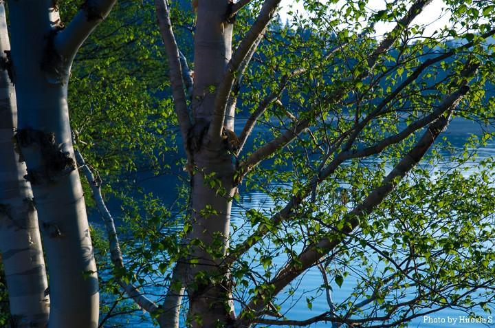 早朝の然別湖畔