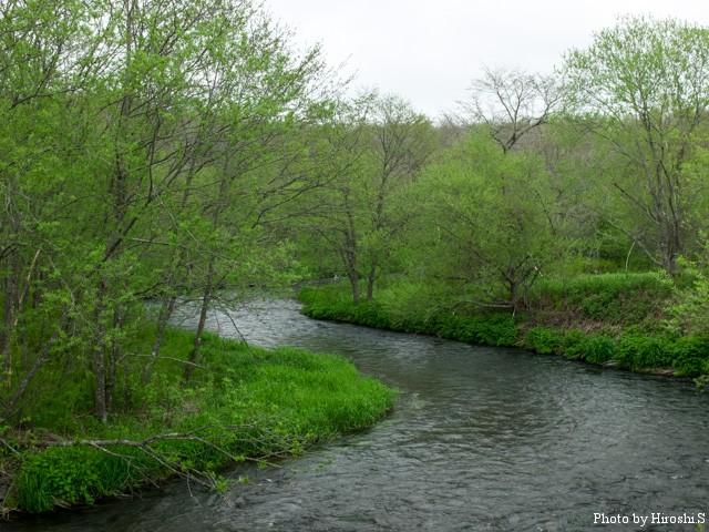 新緑の西別川