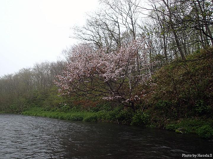 冷涼地とはいえ、6月に桜とは。土手の斜面には、残雪の残っていた。