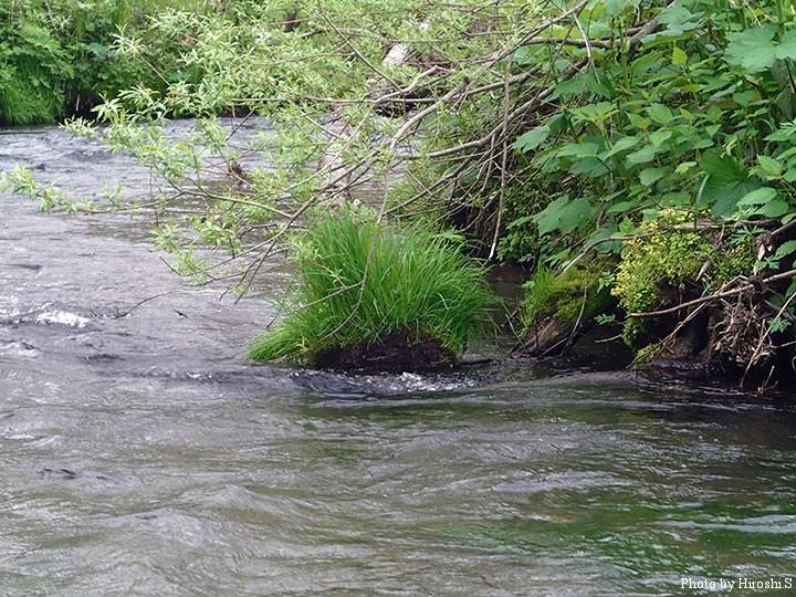 川原は殆どなく、独特の流れとなっている。