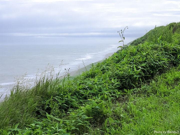 広尾まで続く、十勝の海岸線。のどかで寂しくもある。