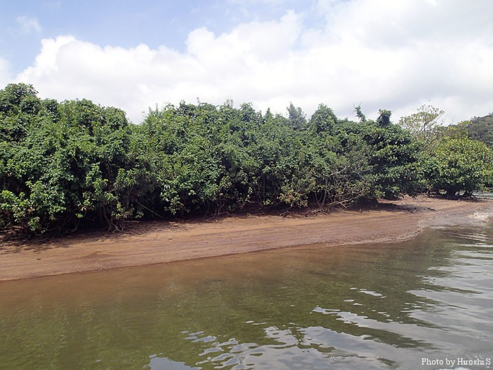 岸際の浅瀬がポイント。小型ポッパーが有効。