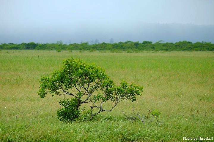 霧多布湿原にて 辛うじて守られているのが、道東の湿原なのかもしれない。