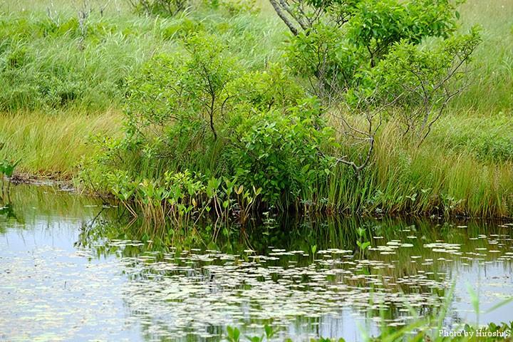 霧多布湿原にて 湿原の始まりは沼である。