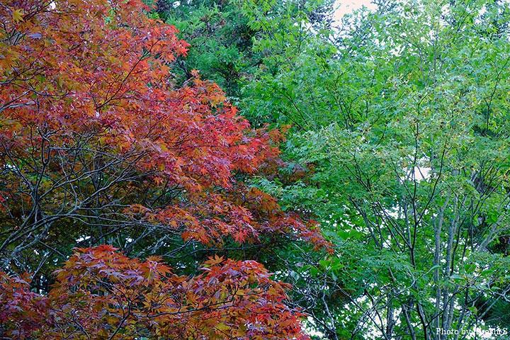 そろそろ山は紅葉が始まりつつあるようだ。