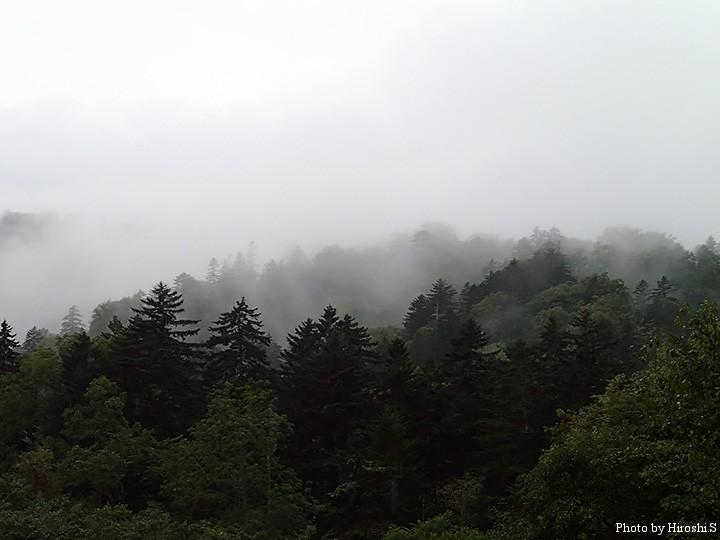阿寒近くになると、針葉樹と霧の組み合わせが多くなる。