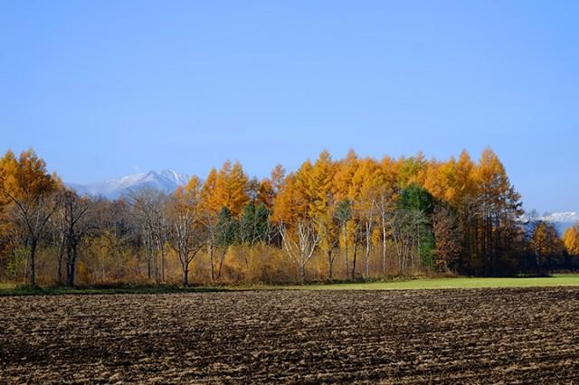 帯広市大正町付近 カラマツ林の奥に、日高山脈の山が顔を出す。
