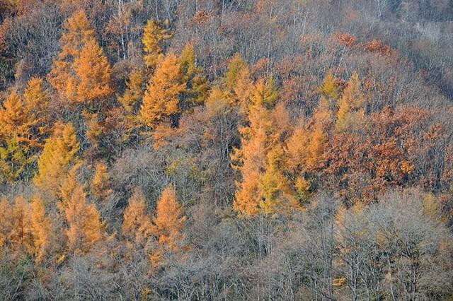 野塚峠付近 標高を上げる毎にカラマツがまばらとなっていく。