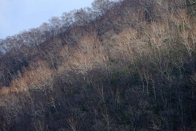 野塚峠 野塚トンネル付近 既に木々は落葉し、モノトーンの世界。