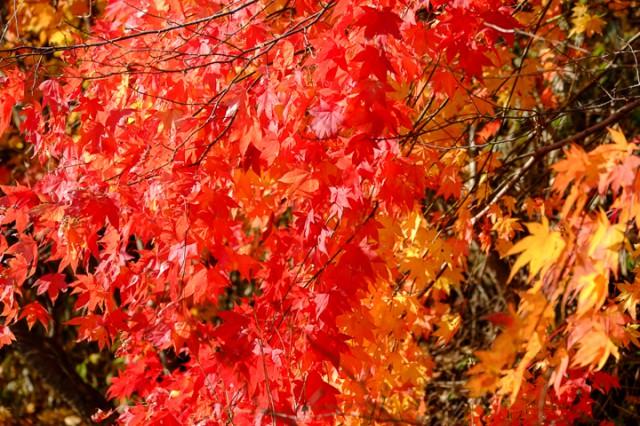 浦河町付近 日高はまだまだ紅葉が楽しめる。