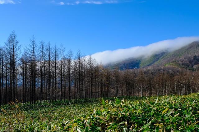 日高山脈を境に気候が違う理由が写っている。