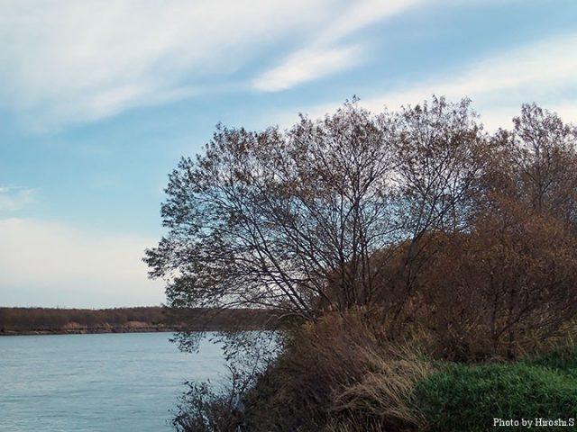 水位は平水より50cmは高く、濁りも強い。