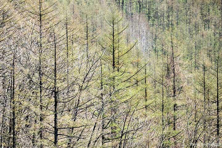 清水町にて 十勝の冬は厳しいが、春は一気に緑になるような気がする