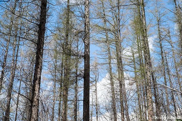 滝野すずらん丘陵公園 滝野の森ゾーンの林