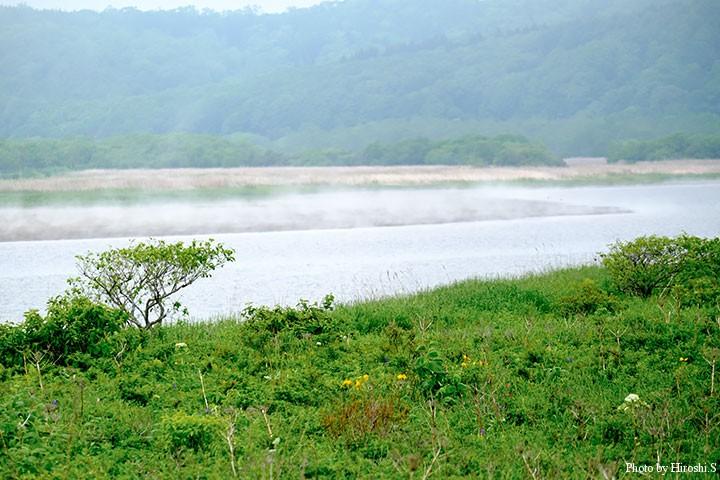 海岸近くの湖沼は原生花園