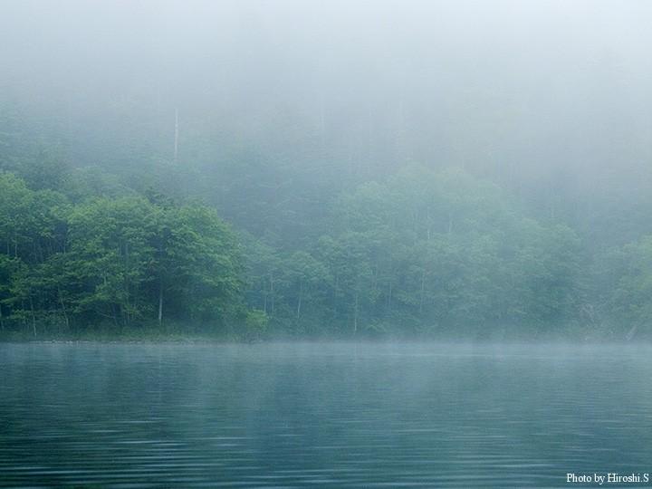 霧の中にみえる山の木々が美しい