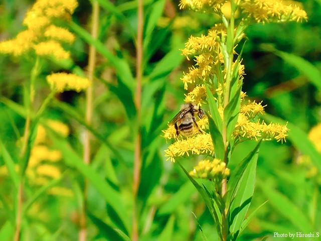 夏の終わりに蜜を求める