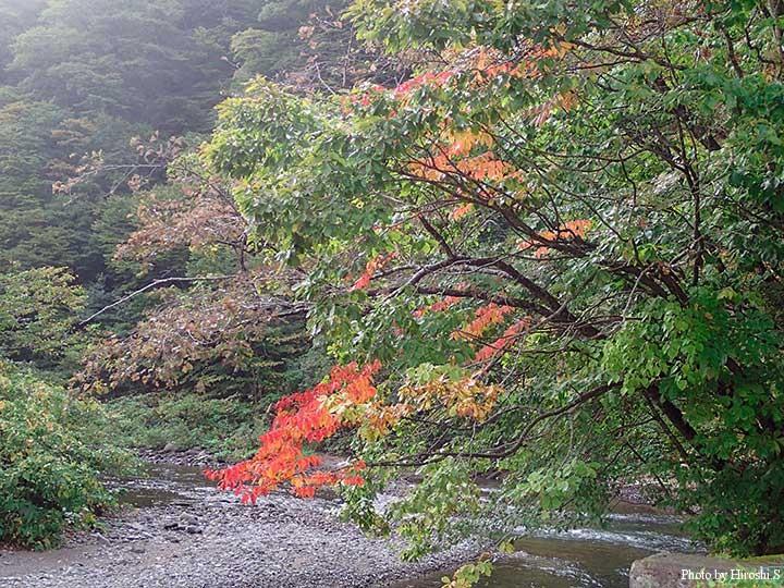紅葉が始まった道南の渓流