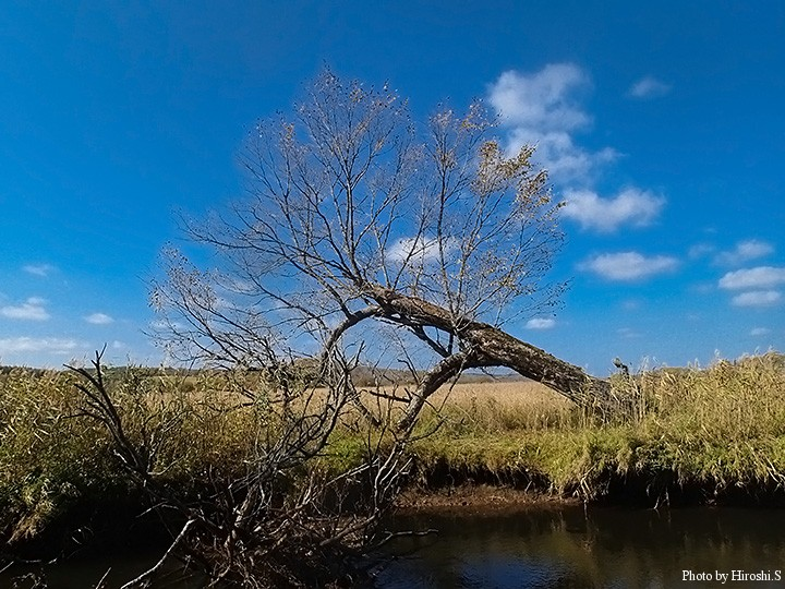 湿原の中で竿を振る
