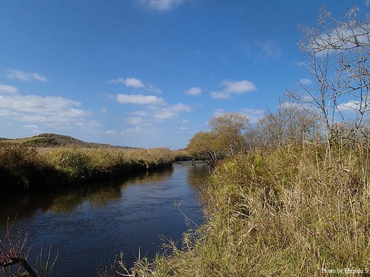 湿原を悠々と流れる