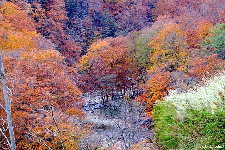 雲石峠の紅葉 既にピークは過ぎ去っていたが、まだ美しい色を見せてくれた。