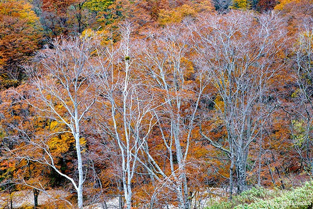 道南の山々も秋色に染まっていた
