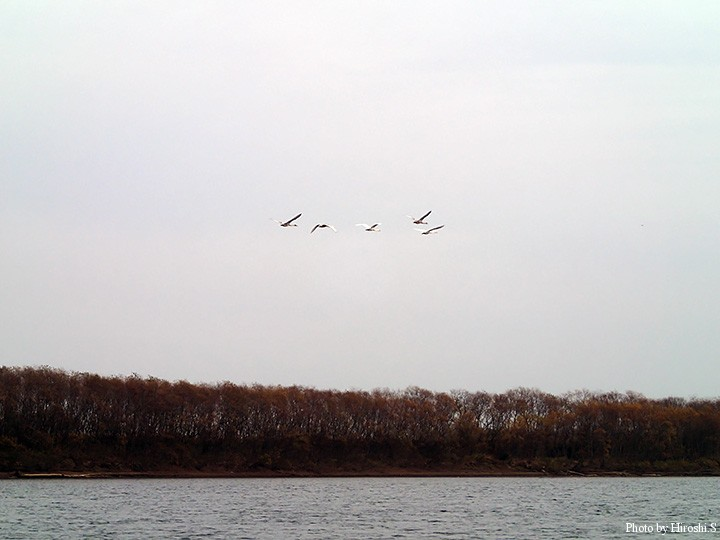 渡り鳥が本格化する頃、シーズン最盛期を迎えるだろう。