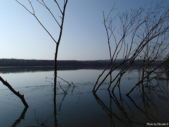 魚は沖に定位しているようで、時にはこの木々の間をフルキャストした。