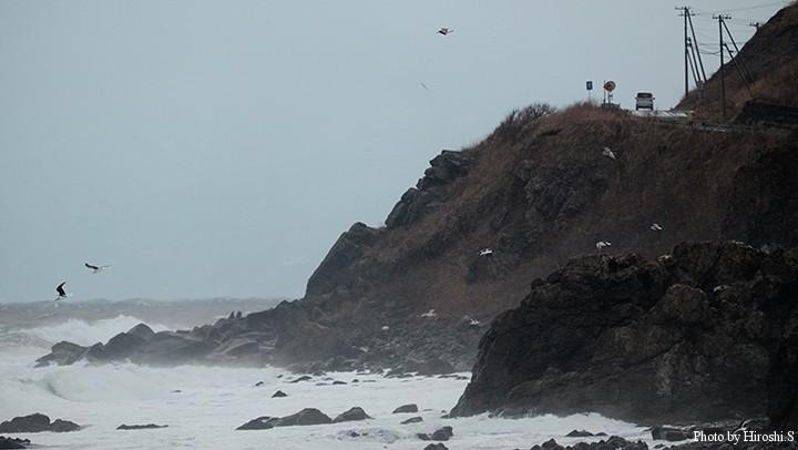 大時化の日本海 カモメは強風の中でよく飛べるものだ。