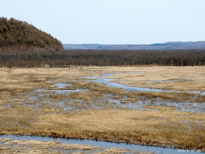 クッタロ湿原(釧路湿原)は、水が溢れていた