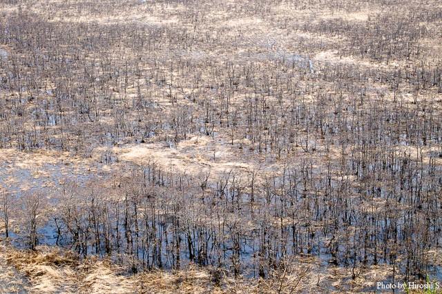 雪解け水と降雨により、道東の湿原は水が溢れている。
