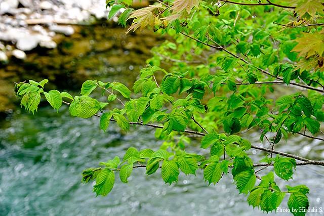 山の木々も葉が伸び、良い季節になってきた。