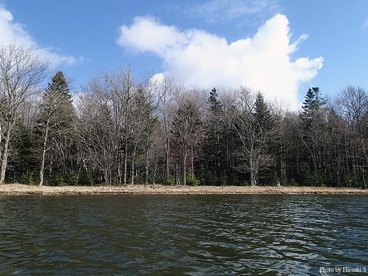 湖水に立ち込み、振り返ると森と青空が見える