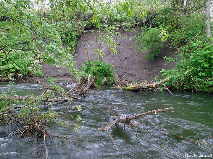 ポイントは多いがキャスト精度が大切な川である