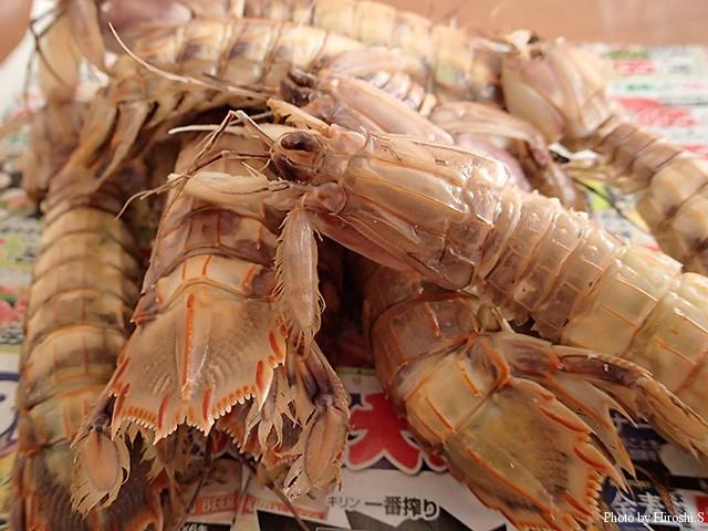 期待はしていなかったけど、蝦蛄が売られていた。雄100円雌150円也。