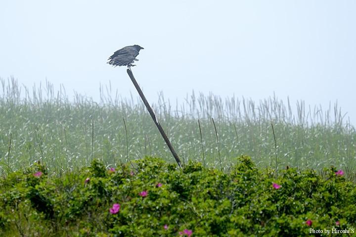 霧のなか、支柱に大型の鳥がとまっていた