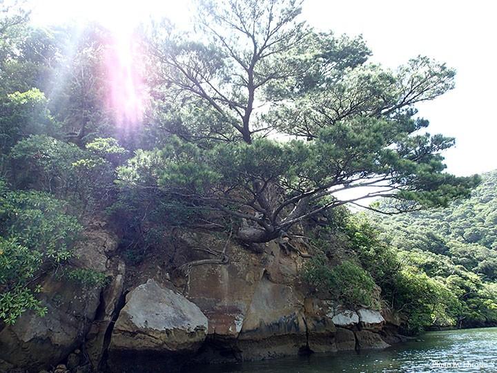 砂岩から真横に大木が伸びている