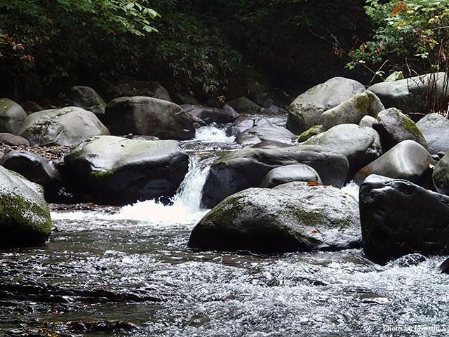 明るく躍動的さえある、道南の渓流。