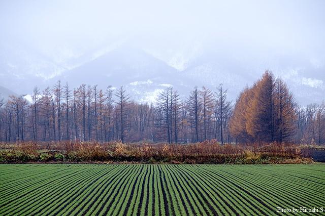 秋まき小麦が唯一の緑である。