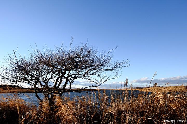 十勝川流域のある風景
