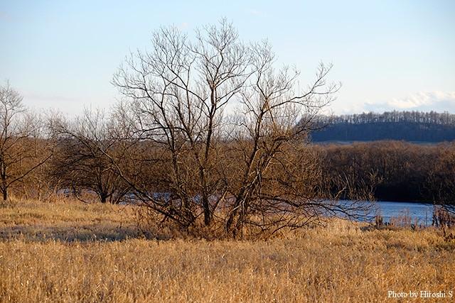 河川敷の木だけで絵になるものだ。