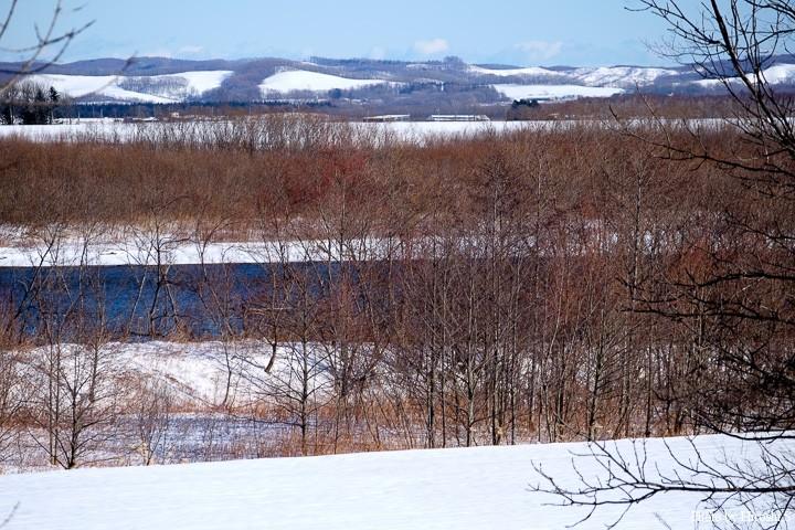 十勝川右岸 降雪の為、どうしてもアプローチしやすい場所を選んでしまう。