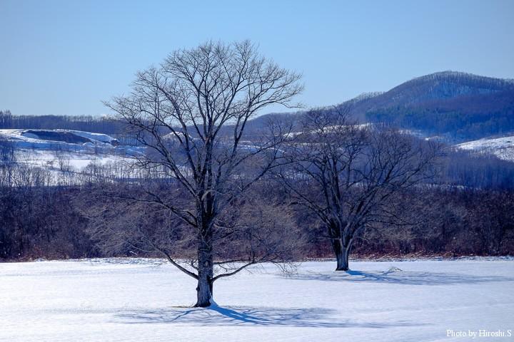 浦幌のハルニレの木もすっかり落葉し、春が来るのを静かに待っている。
