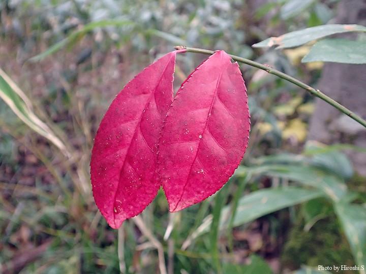 山はモノトーンとなりつつある季節、こうした色を見つけるとうれしくなるものだ。