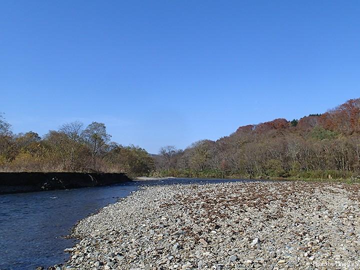 道東の音別川に似た雰囲気。遡上する魚種も似ているが、近年ではこちらの方が鮭の遡上は多いかもしれない。