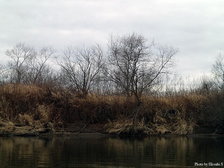 川は既にモノトーンである